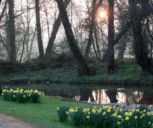 daffodils-sun-morning